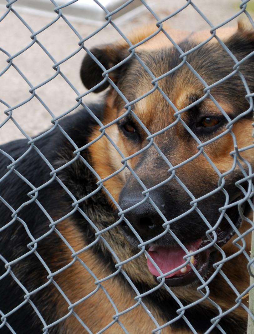 hund i bur stängsel